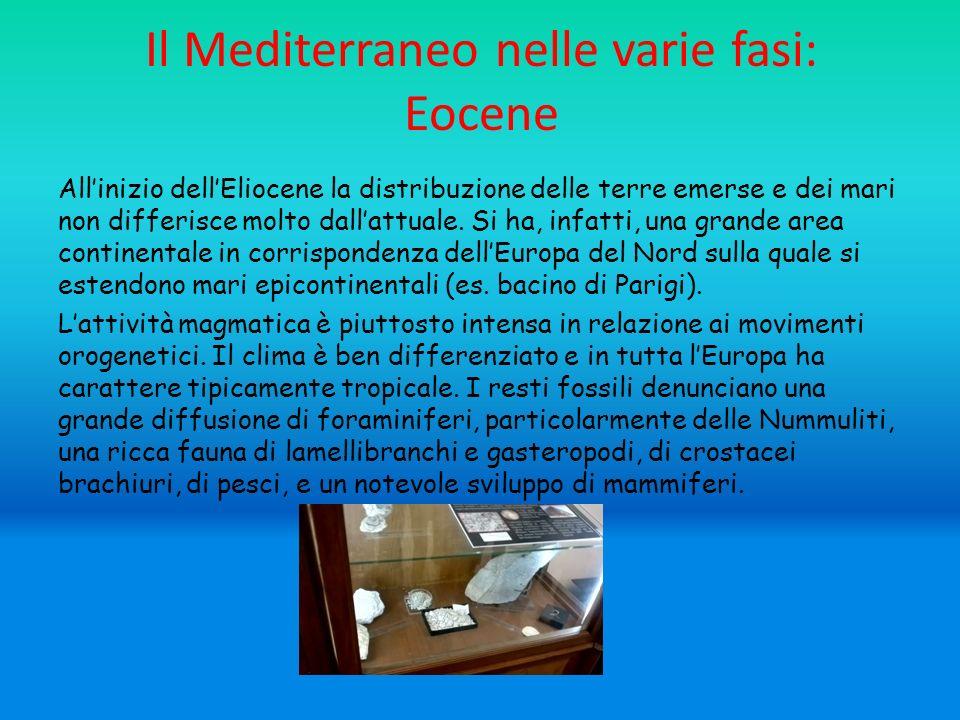 Il Mediterraneo nelle varie fasi: Eocene Allinizio dellEliocene la distribuzione delle terre emerse e dei mari non differisce molto dallattuale.