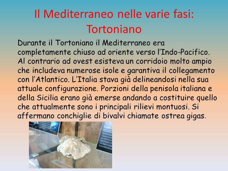 Il Mediterraneo nelle varie fasi: Tortoniano Durante il Tortoniano il Mediterraneo era completamente chiuso ad oriente verso lIndo-Pacifico.