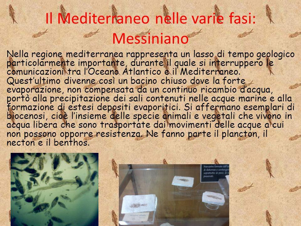 Il Mediterraneo nelle varie fasi: Messiniano Nella regione mediterranea rappresenta un lasso di tempo geologico particolarmente importante, durante il quale si interruppero le comunicazioni tra lOceano Atlantico e il Mediterraneo.