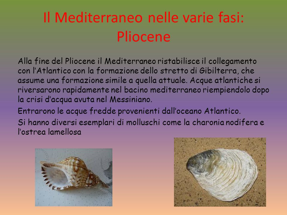Il Mediterraneo nelle varie fasi: Pliocene Alla fine del Pliocene il Mediterraneo ristabilisce il collegamento con lAtlantico con la formazione dello stretto di Gibilterra, che assume una formazione simile a quella attuale.