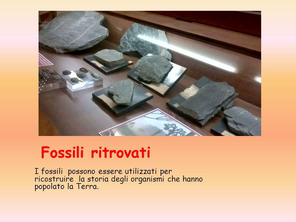 Fossili ritrovati I fossili possono essere utilizzati per ricostruire la storia degli organismi che hanno popolato la Terra.
