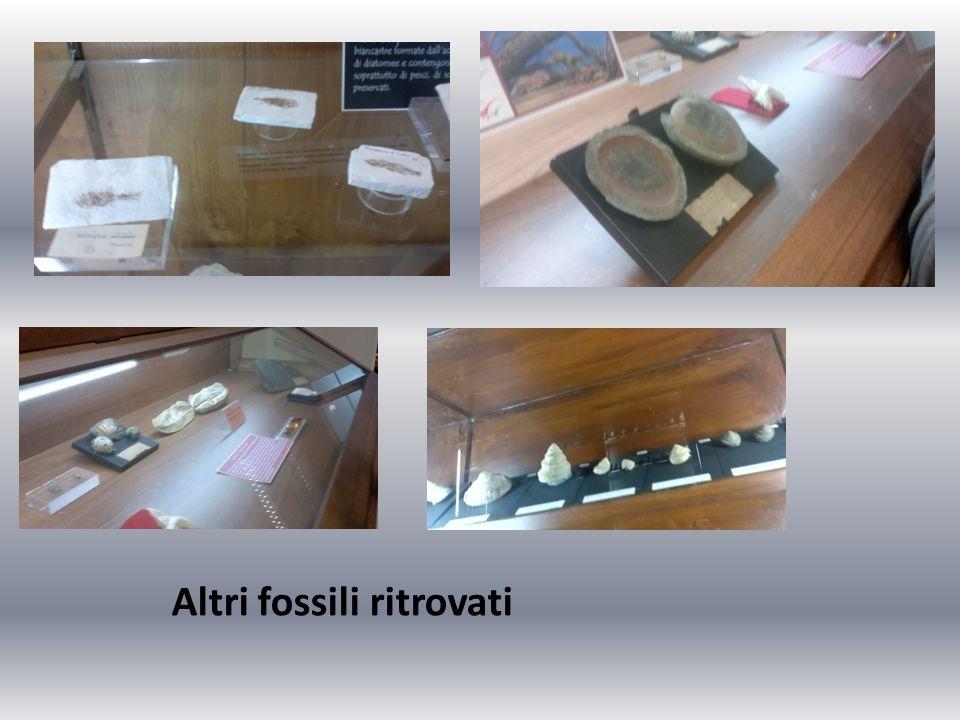 Altri fossili ritrovati