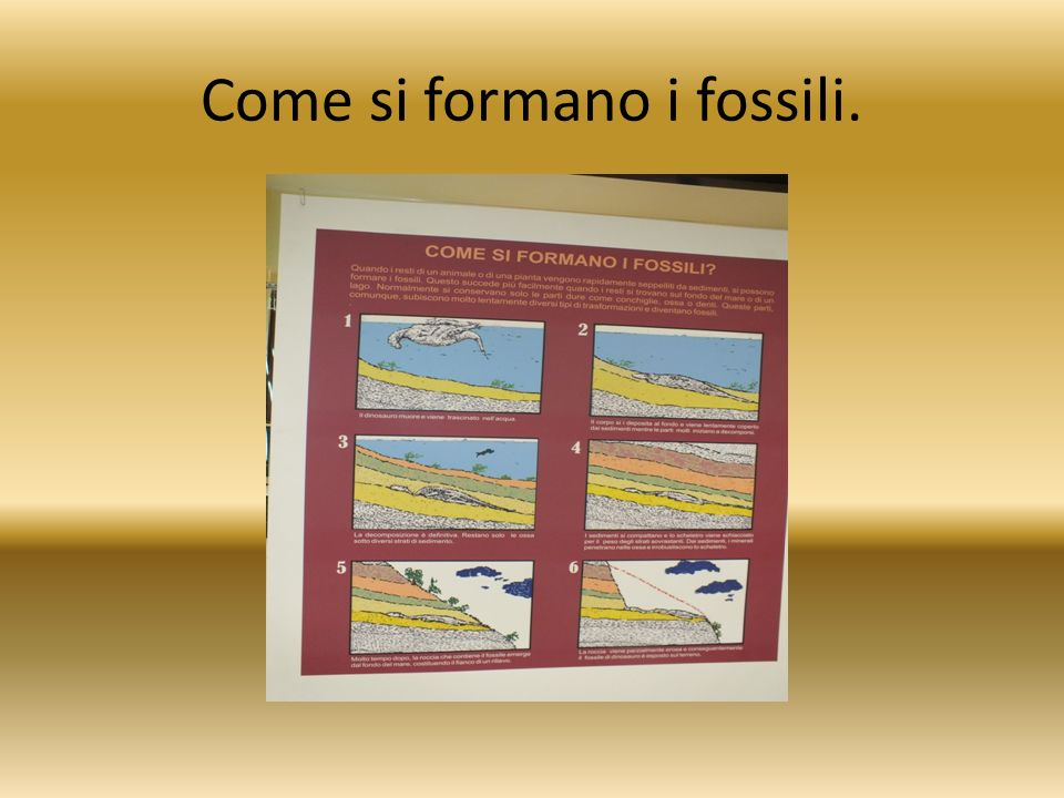 Come si formano i fossili.
