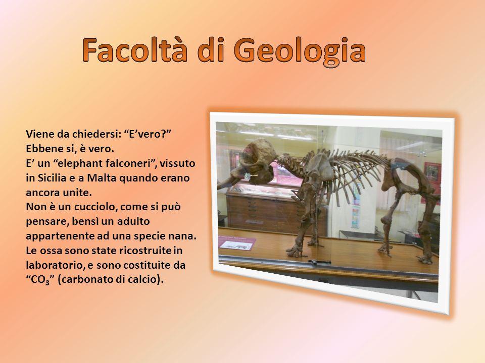 Questa specie era alta circa 180cm e il suo peso era di circa 1100kg.