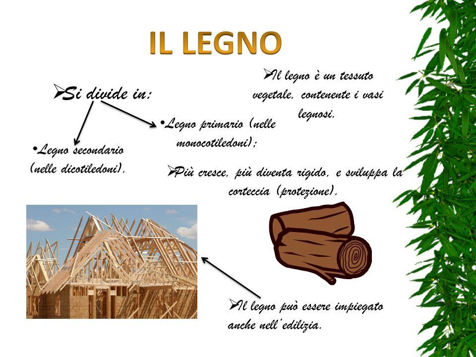 Il legno è un tessuto vegetale, contenente i vasi legnosi. Si divide in: Legno primario (nelle monocotiledoni); Legno secondario (nelle dicotiledoni).