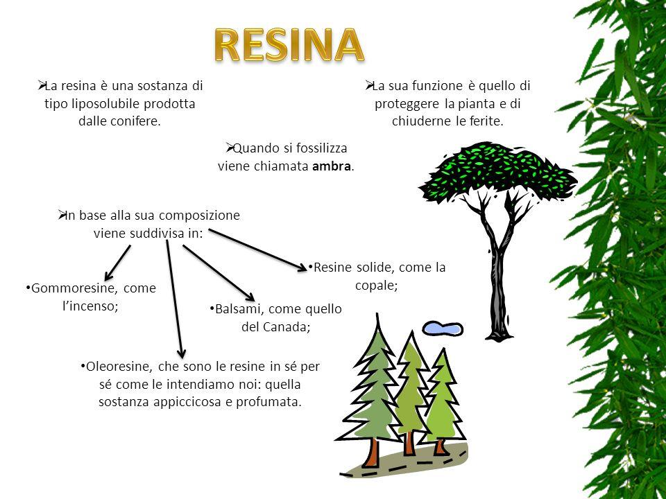La resina è una sostanza di tipo liposolubile prodotta dalle conifere. La sua funzione è quello di proteggere la pianta e di chiuderne le ferite. Quan