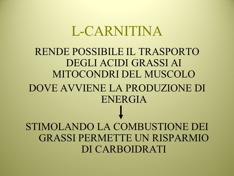 L-CARNITINA RENDE POSSIBILE IL TRASPORTO DEGLI ACIDI GRASSI AI MITOCONDRI DEL MUSCOLO DOVE AVVIENE LA PRODUZIONE DI ENERGIA STIMOLANDO LA COMBUSTIONE