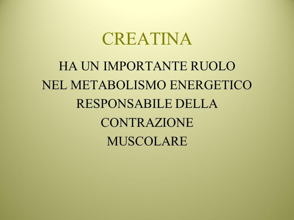 CREATINA HA UN IMPORTANTE RUOLO NEL METABOLISMO ENERGETICO RESPONSABILE DELLA CONTRAZIONE MUSCOLARE