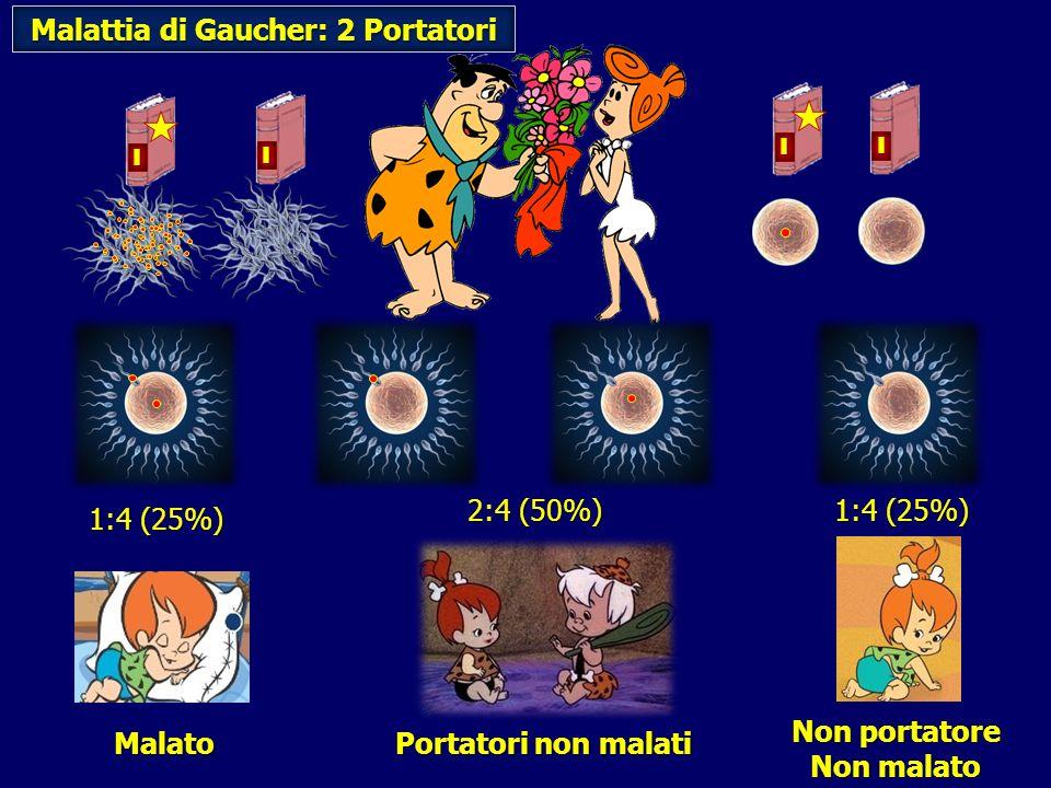 Non portatore Non malato 1:4 (25%) Portatori non malati 2:4 (50%) Malattia di Gaucher: 2 Portatori Malato 1:4 (25%) I I I I
