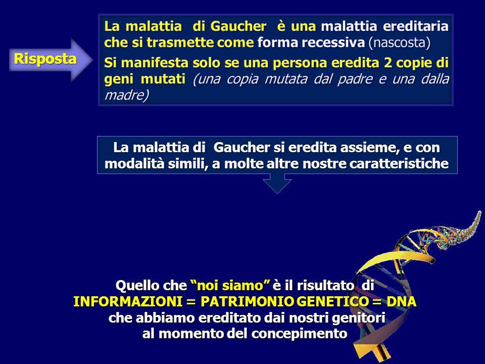 Risposta Quello che noi siamo è il risultato di INFORMAZIONI = PATRIMONIO GENETICO = DNA che abbiamo ereditato dai nostri genitori che abbiamo ereditato dai nostri genitori al momento del concepimento La malattia di Gaucher si eredita assieme, e con modalità simili, a molte altre nostre caratteristiche