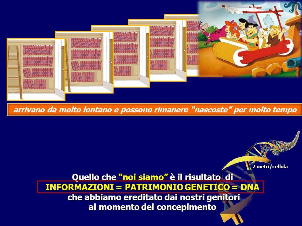 I I I I II paterno materno Solo una copia dei volumi dellenciclopedia INFORMAZIONI=PATRIMONIO GENETICO=DNA verrà trasmessa nelle generazioni