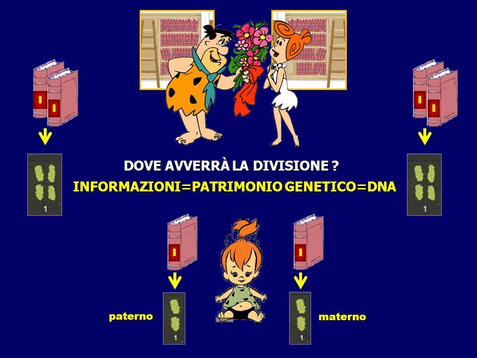 I I paterno materno INFORMAZIONI=PATRIMONIO GENETICO=DNA I I I I DOVE AVVERRÀ LA DIVISIONE ?