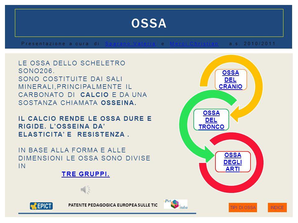 OSSA LE OSSA DELLO SCHELETRO SONO206.