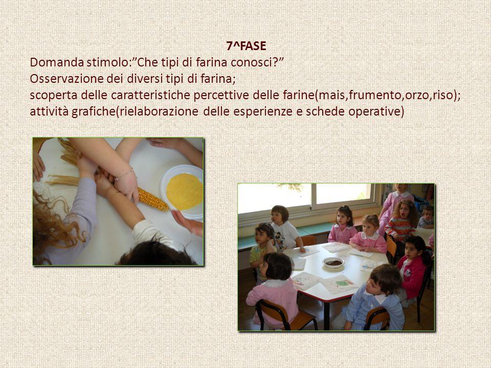 7^FASE Domanda stimolo:Che tipi di farina conosci? Osservazione dei diversi tipi di farina; scoperta delle caratteristiche percettive delle farine(mai