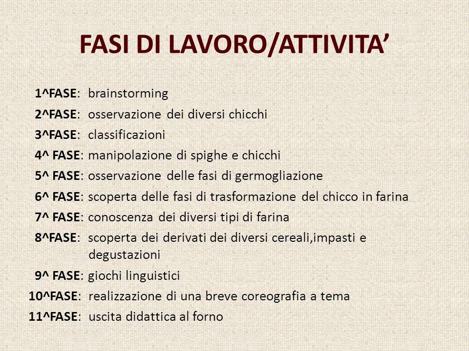 FASI DI LAVORO/ATTIVITA 1^FASE: brainstorming 2^FASE: osservazione dei diversi chicchi 3^FASE: classificazioni 4^ FASE: manipolazione di spighe e chic