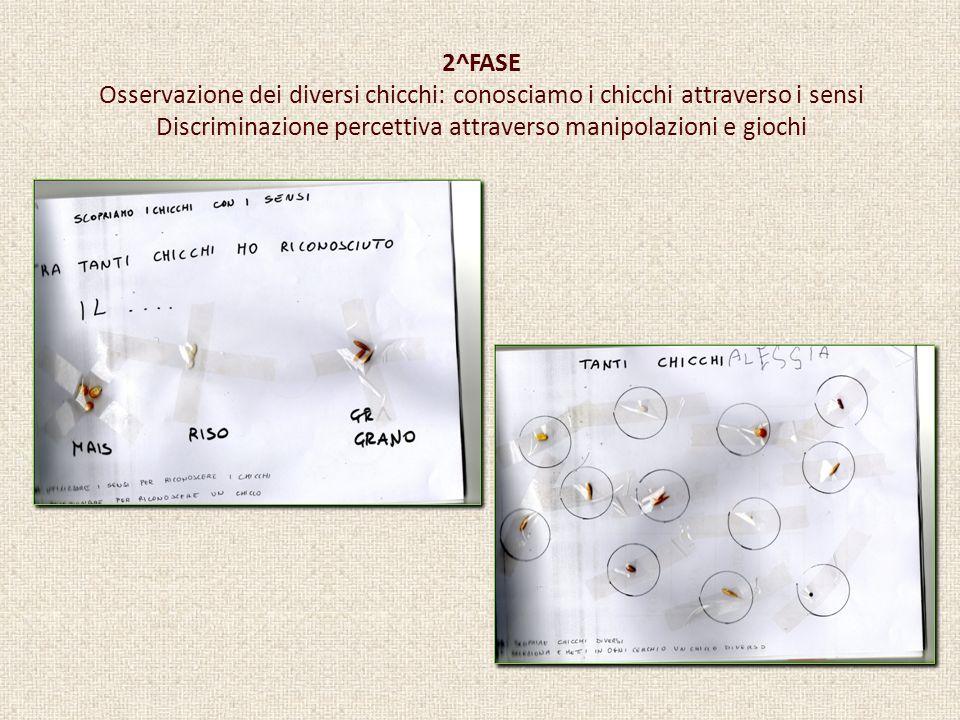 2^FASE Osservazione dei diversi chicchi: conosciamo i chicchi attraverso i sensi Discriminazione percettiva attraverso manipolazioni e giochi
