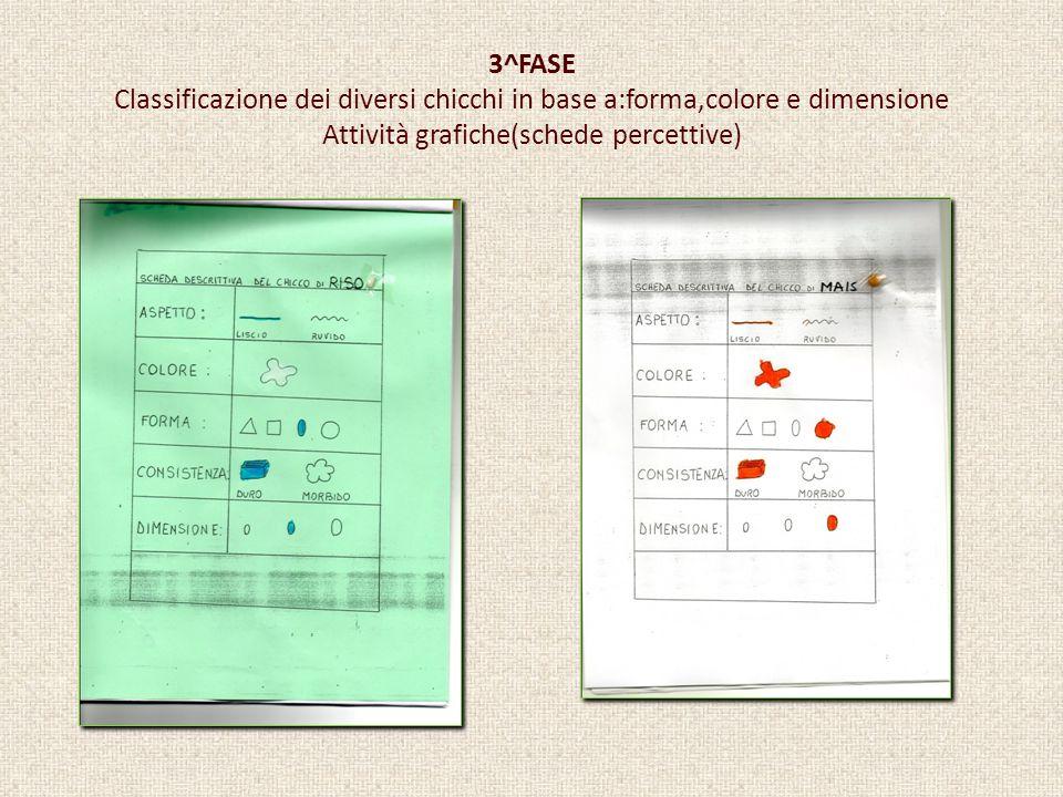 3^FASE Classificazione dei diversi chicchi in base a:forma,colore e dimensione Attività grafiche(schede percettive)