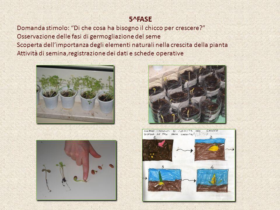 5^FASE Domanda stimolo: Di che cosa ha bisogno il chicco per crescere? Osservazione delle fasi di germogliazione del seme Scoperta dellimportanza degl