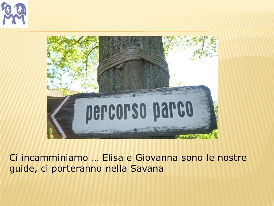 Ci incamminiamo … Elisa e Giovanna sono le nostre guide, ci porteranno nella Savana