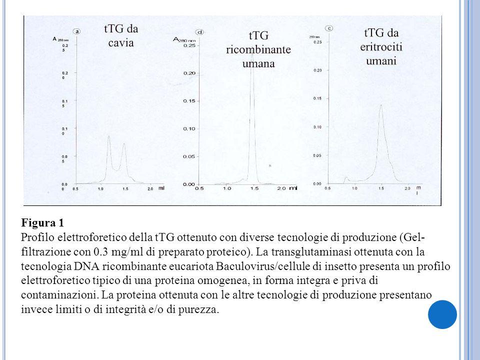 Figura 1 Profilo elettroforetico della tTG ottenuto con diverse tecnologie di produzione (Gel- filtrazione con 0.3 mg/ml di preparato proteico). La tr