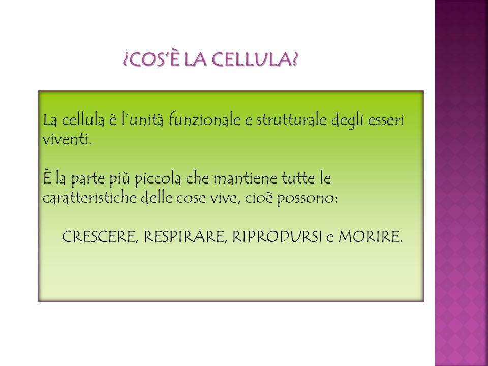 ¿COSÈ LA CELLULA? La cellula è lunità funzionale e strutturale degli esseri viventi. È la parte più piccola che mantiene tutte le caratteristiche dell