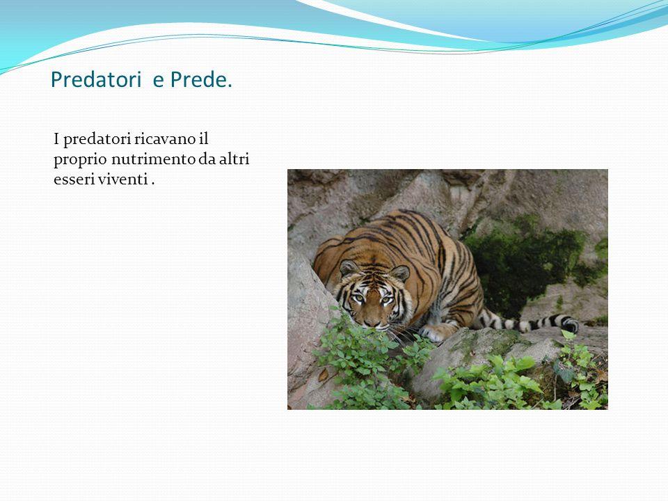 Equilibrio tra prede e predatori Il numero delle prede condiziona il numero dei predatori e viceversa.