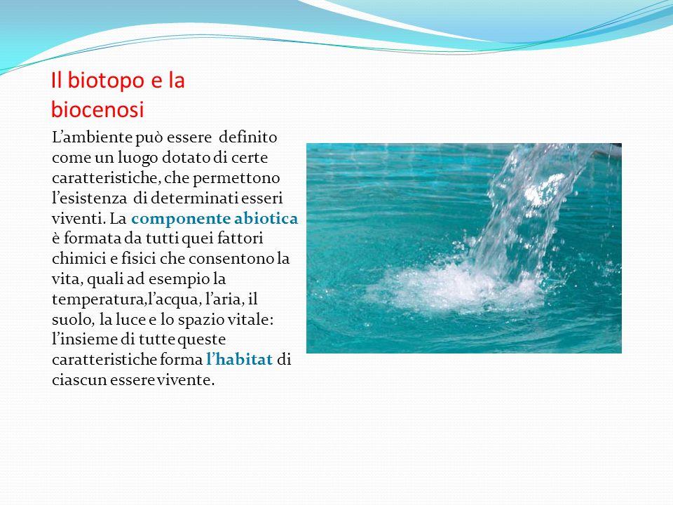 Biotopo e biocenosi Lambiente è costituito da due componenti:una abiotica e una biotica La biocenosi è costituita dallinsieme degli organismi viventi e il biotopo è lambiente in cui essi vivono.