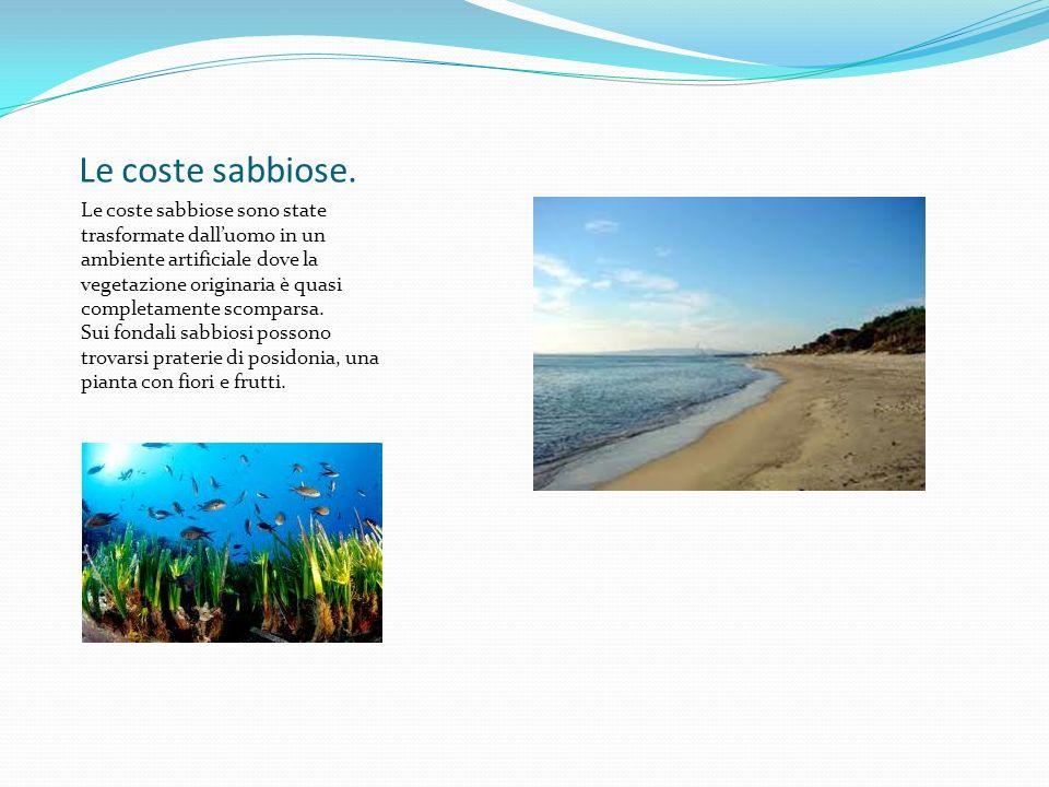 Il mare aperto Il mare aperto è ricco di organismi viventi, molti dei quali sono oggetti di pesca.