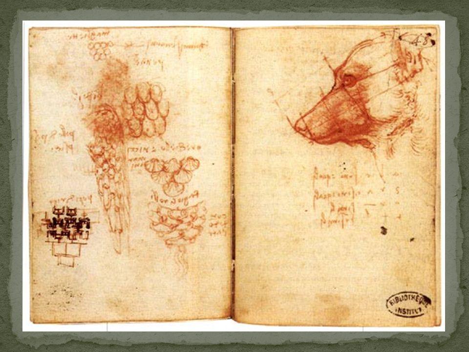 Gli studi sul volo compiuti da Leonardo compresero losservazione del volo degli uccelli, lo studio del movimento meccanico dellala e le riflessioni sulla resistenza dellaria, che approdarono allideazione del paracadute.