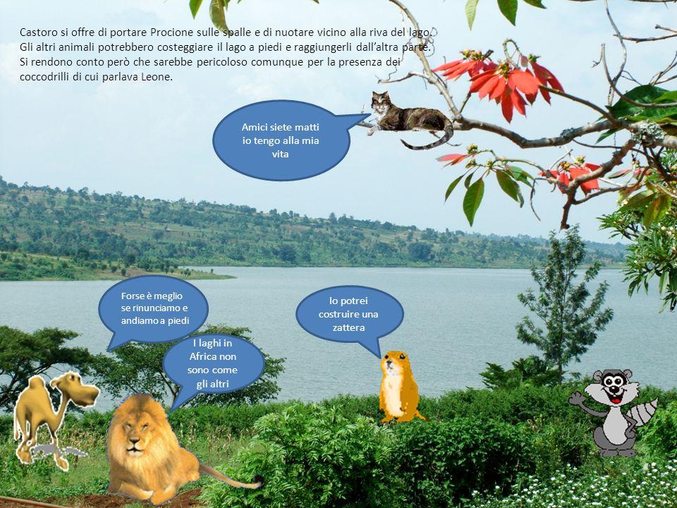 Castoro si offre di portare Procione sulle spalle e di nuotare vicino alla riva del lago. Gli altri animali potrebbero costeggiare il lago a piedi e r