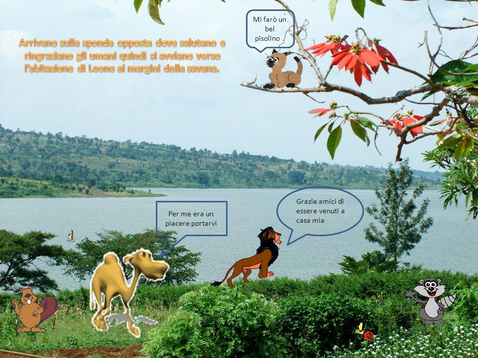 Lì trovano un ambiente adatto a tutti: limmenso lago con il pesce per gatto e procione, gli alberi per castoro, le distese di erba per Cammello, la savana con gli animali selvatici prede di Leone.