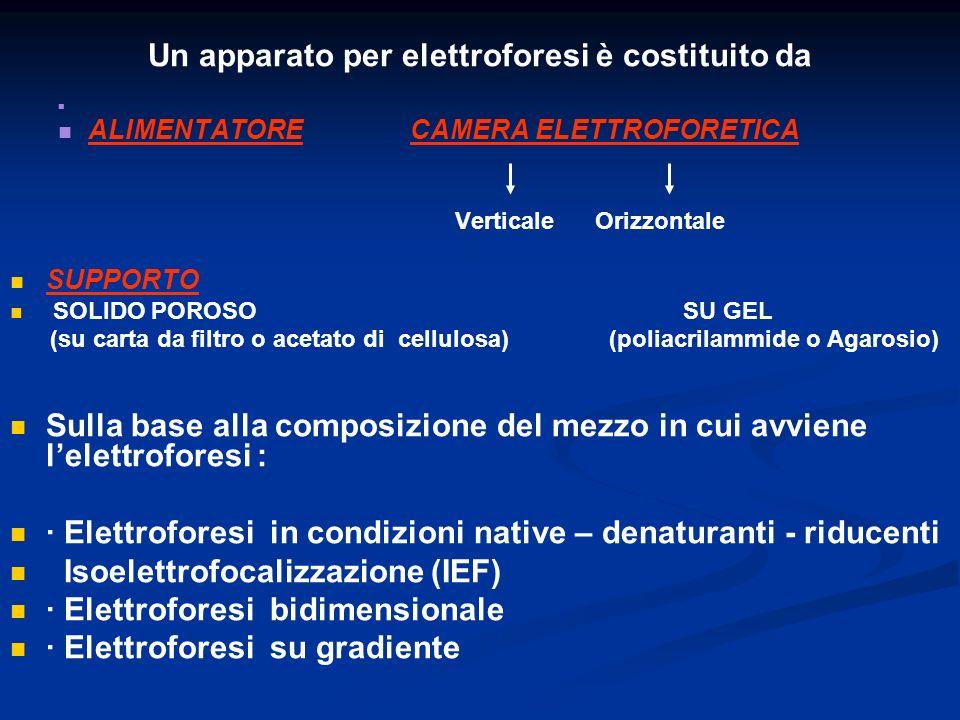 Un apparato per elettroforesi è costituito da ALIMENTATORE CAMERA ELETTROFORETICA Verticale Orizzontale SUPPORTO SOLIDO POROSO SU GEL (su carta da fil