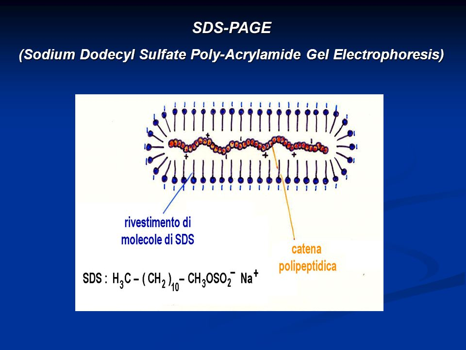 SDS-PAGE (Sodium Dodecyl Sulfate Poly-Acrylamide Gel Electrophoresis)