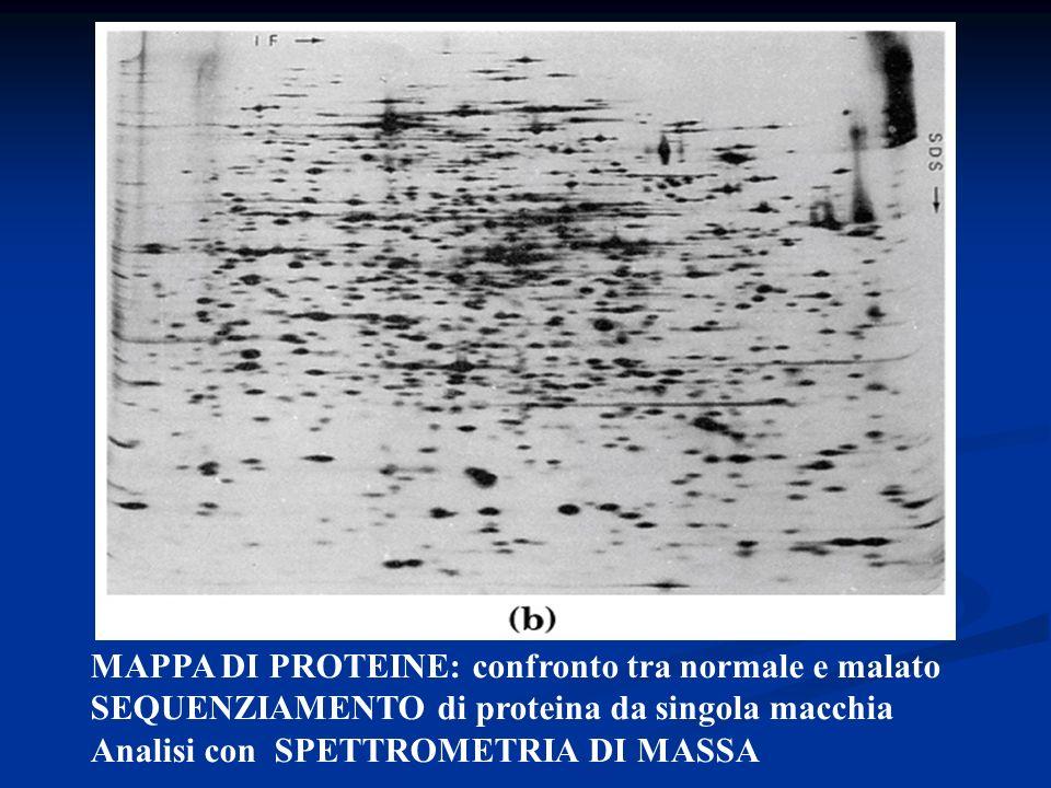 MAPPA DI PROTEINE: confronto tra normale e malato SEQUENZIAMENTO di proteina da singola macchia Analisi con SPETTROMETRIA DI MASSA