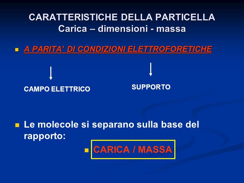 Un apparato per elettroforesi è costituito da ALIMENTATORE CAMERA ELETTROFORETICA Verticale Orizzontale SUPPORTO SOLIDO POROSO SU GEL (su carta da filtro o acetato di cellulosa) (poliacrilammide o Agarosio) Sulla base alla composizione del mezzo in cui avviene lelettroforesi : · Elettroforesi in condizioni native – denaturanti - riducenti Isoelettrofocalizzazione (IEF) · Elettroforesi bidimensionale · Elettroforesi su gradiente