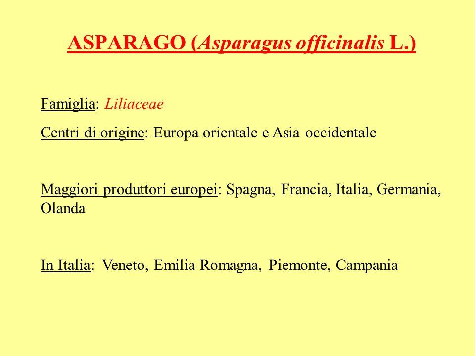 ASPARAGO (Asparagus officinalis L.) Famiglia: Liliaceae Centri di origine: Europa orientale e Asia occidentale Maggiori produttori europei: Spagna, Fr