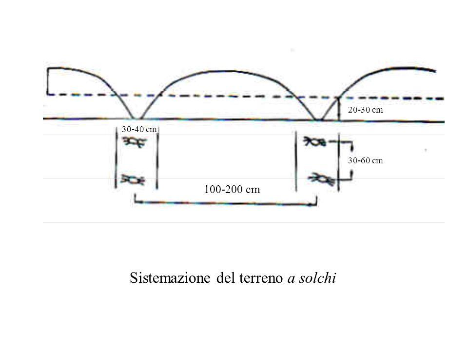 Sistemazione del terreno a solchi 100-200 cm 30-40 cm 30-60 cm 20-30 cm