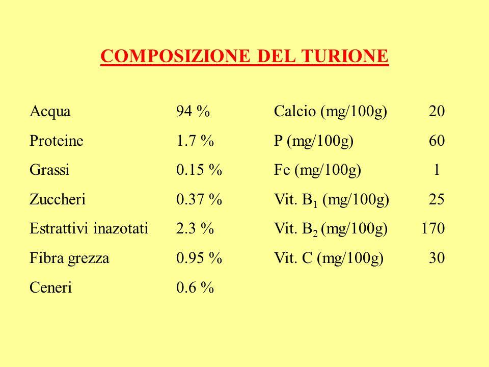COMPOSIZIONE DEL TURIONE Acqua94 %Calcio (mg/100g) 20 Proteine1.7 %P (mg/100g) 60 Grassi0.15 %Fe (mg/100g) 1 Zuccheri0.37 % Vit. B 1 (mg/100g) 25 Estr
