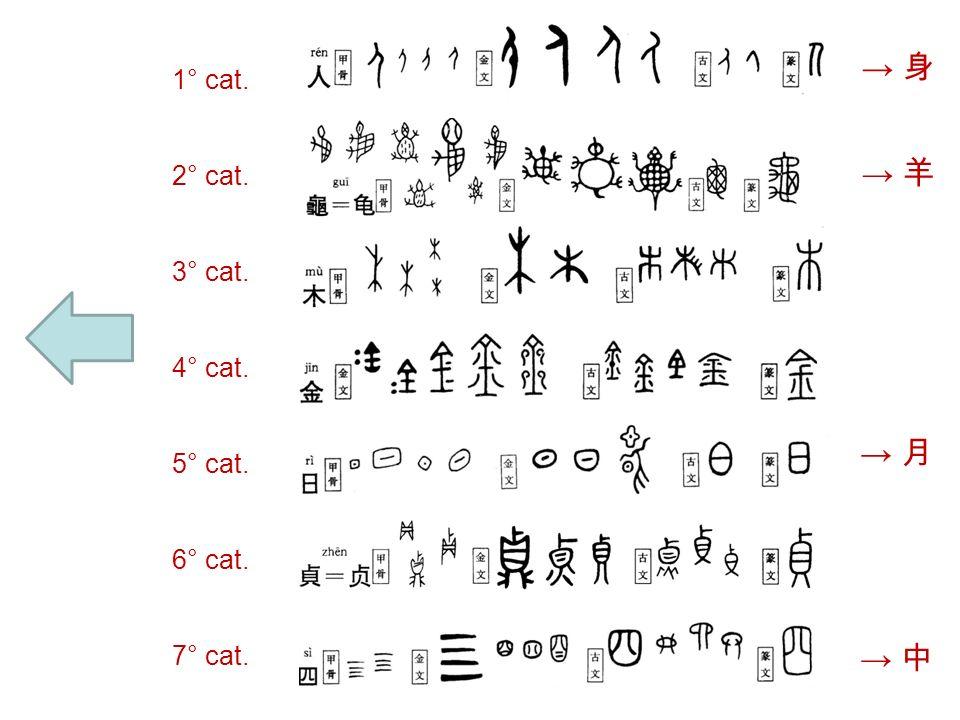 Categorizzazione dei radicali 1) luomo e il corpo umano ( Es:, ); 2) animali, insetti, rettili e loro parti del corpo (Es:, ); 3) alberi, piante, vino