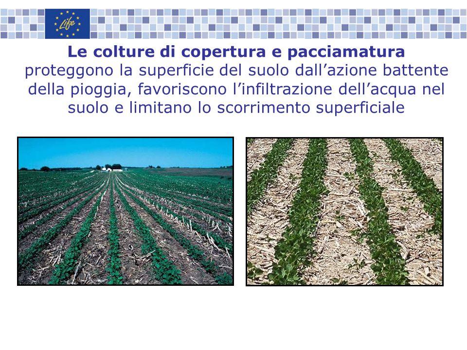 Le colture di copertura e pacciamatura proteggono la superficie del suolo dallazione battente della pioggia, favoriscono linfiltrazione dellacqua nel
