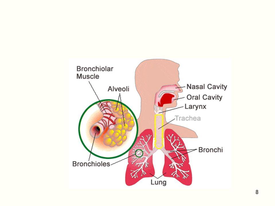 Complicanze Intermedie Desaturazione intraoperatoria Lesioni della parete tracheale posteriore Ab ingestis Polmonite Atelettasia Lesione della cartilagini tracheali 39