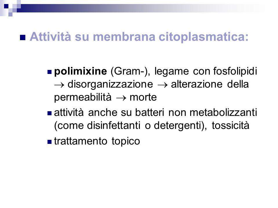 Attività su membrana citoplasmatica: polimixine (Gram-), legame con fosfolipidi disorganizzazione alterazione della permeabilità morte attività anche