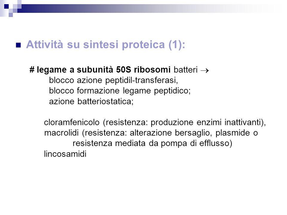 Attività su sintesi proteica (1): # legame a subunità 50S ribosomi batteri blocco azione peptidil-transferasi, blocco formazione legame peptidico; azi