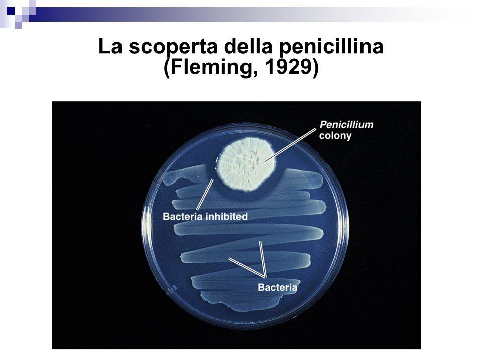 Antibiotici Sostanze naturali prodotte da microorganismi (Streptomyces, Penicillium, Cephalosporium) peso molecolare 150-5000 d.