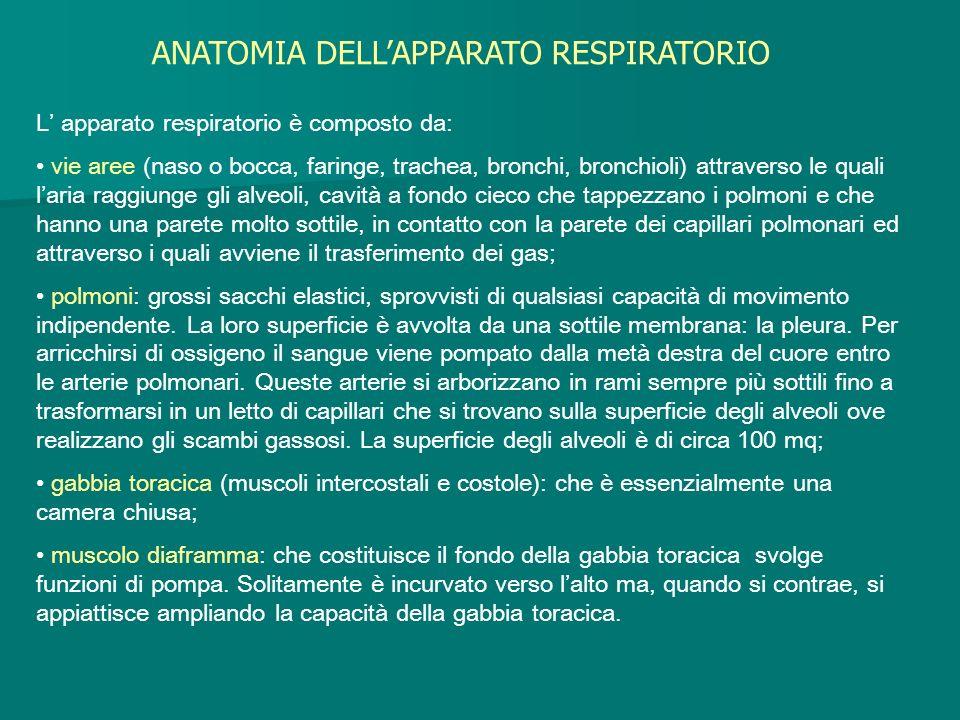 L apparato respiratorio è composto da: vie aree (naso o bocca, faringe, trachea, bronchi, bronchioli) attraverso le quali laria raggiunge gli alveoli,