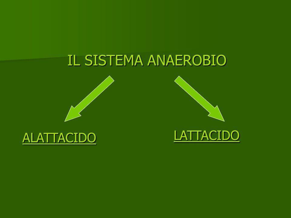 IL SISTEMA ANAEROBIO ALATTACIDO LATTACIDO