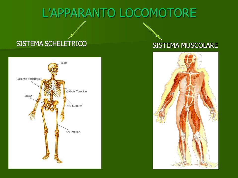LAPPARANTO LOCOMOTORE SISTEMA SCHELETRICO SISTEMA MUSCOLARE