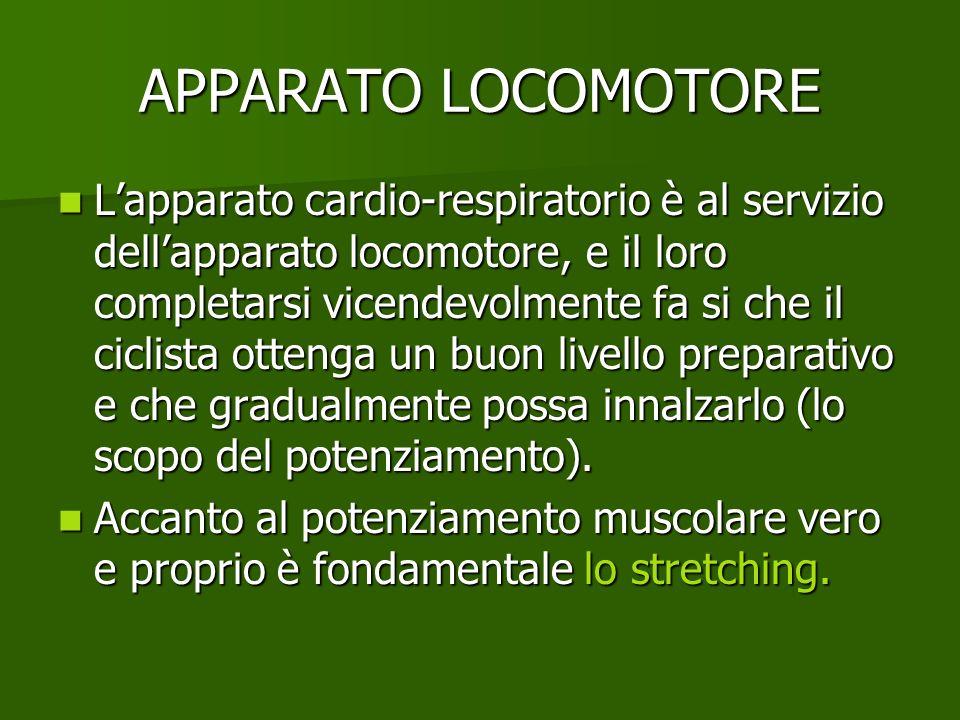 APPARATO LOCOMOTORE Lapparato cardio-respiratorio è al servizio dellapparato locomotore, e il loro completarsi vicendevolmente fa si che il ciclista o