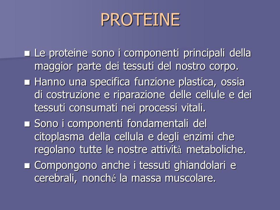 PROTEINE Le proteine sono i componenti principali della maggior parte dei tessuti del nostro corpo. Le proteine sono i componenti principali della mag
