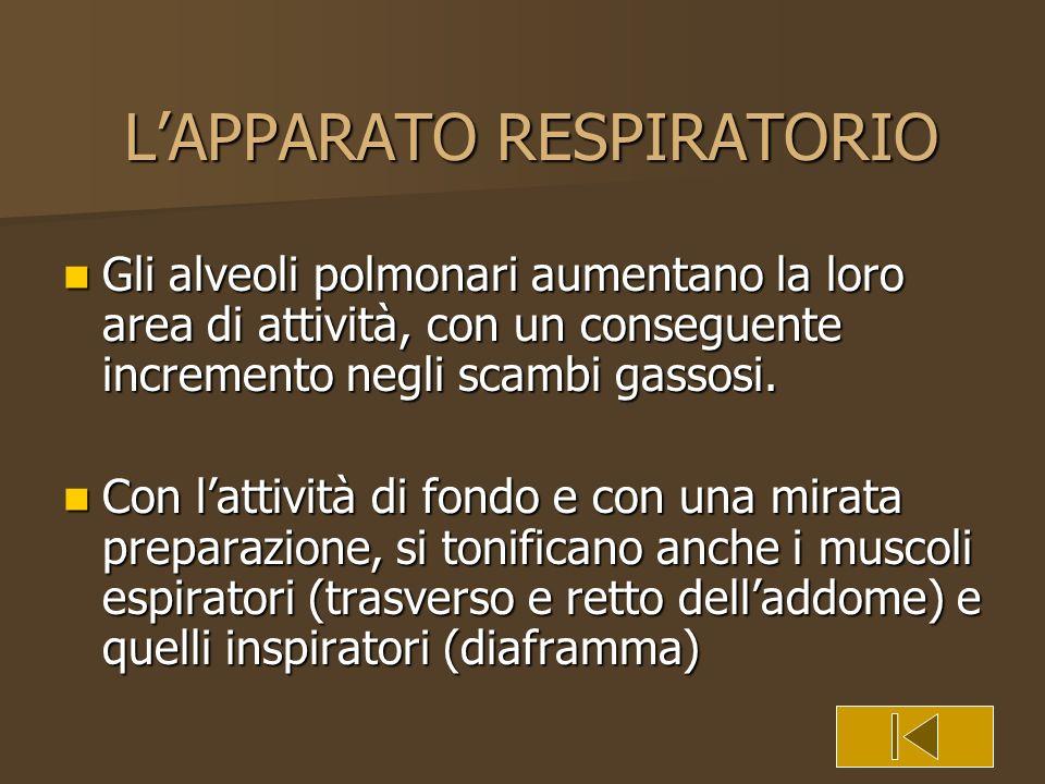 LAPPARATO RESPIRATORIO Gli alveoli polmonari aumentano la loro area di attività, con un conseguente incremento negli scambi gassosi. Gli alveoli polmo